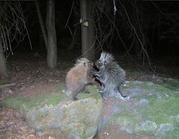 Странные снимки, сделанные фотоловушками в лесу.