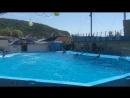 Дельфинарий 3 г. Архипо-Осиповка