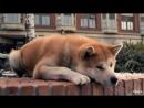 Ха ти ко Са м ый вер н ый др уг 2009 США Великобритания драма BDRip 1080p КИНО ФИЛЬМ LIVE