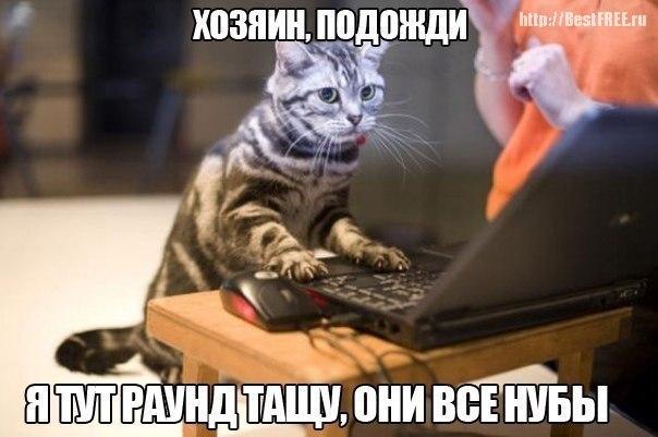 Кот-геймер