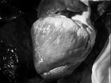 Marcel Duchamp and Maya Deren First Part