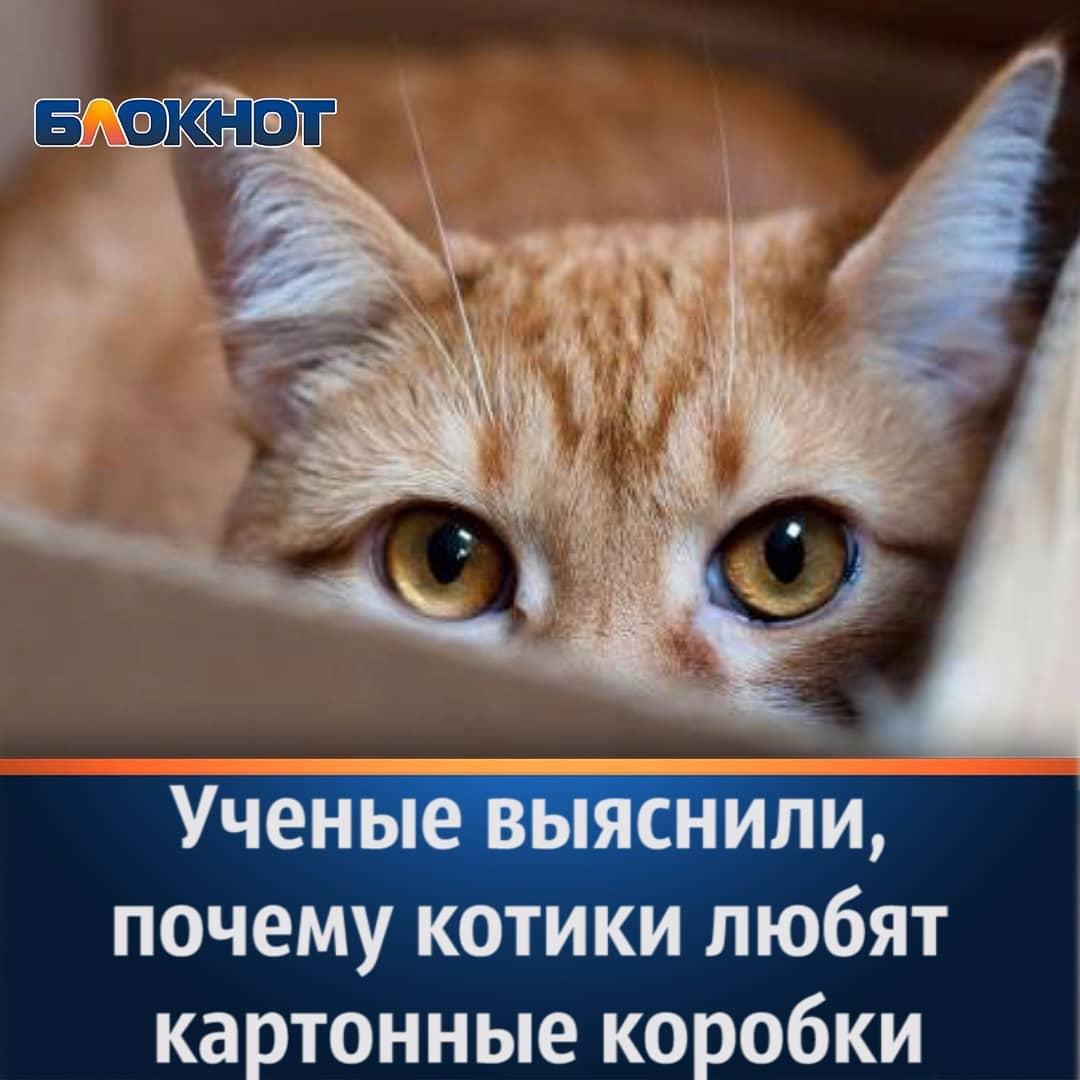 https://pp.userapi.com/c846017/v846017443/bb145/TNq2Pr8z0mU.jpg