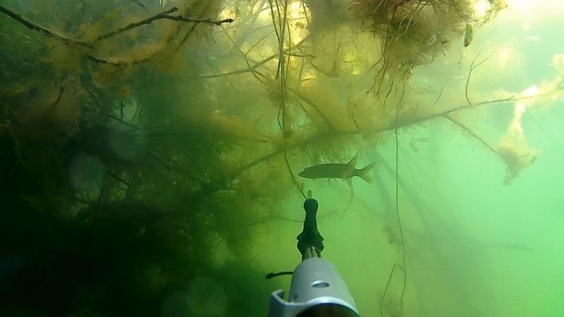 ПОДВОДНАЯ ОХОТА! ПОДВОДНАЯ ПРОГУЛКА на 3-ем Зеленом озере