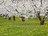 Bahar Dancı... Şehirdad Ruhani