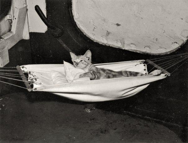 Котенок талисман авианосца НА СЛУЖБЕ ЕЕ ВЕЛИЧЕСТВА ВООРУЖЕННЫХ СИЛ ВЕЛИКОБРИТАНИ...