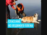 Спасение собаки, вмерзшей в лед