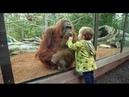 مواقف اكثر من مضحكة تقوم بها القردة امام عد1