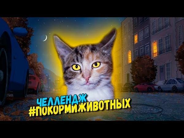 ПокормиЖивотных Challenge | Кормим бездомных кошек и котят / SANI vlog