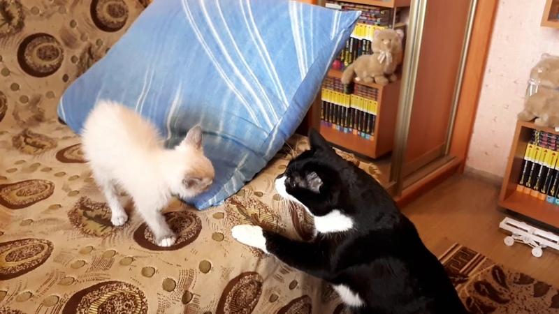 Принесли кота домой