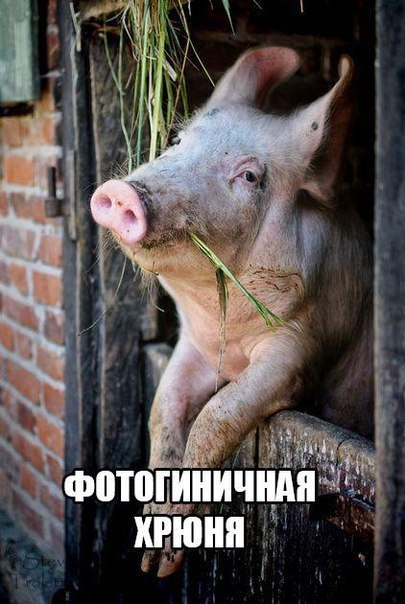 ГОВОРИМ ОБО ВСЕМ - Страница 3 R9py-UiQy48
