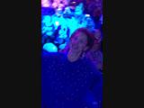 Концерт Филлипа Киркорова Цвет настроения синий