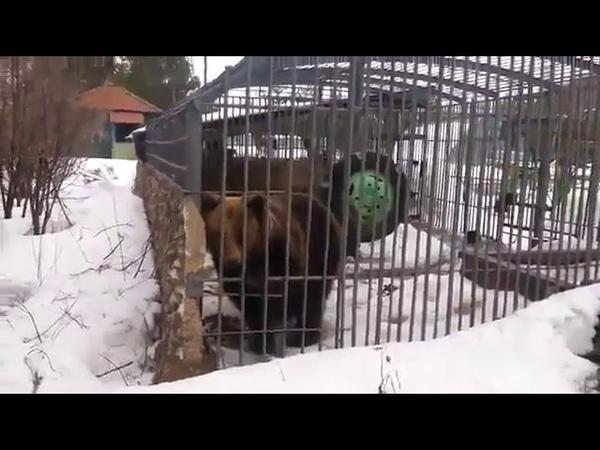 Не лезь, блять, дибил, сука. Решил погладить медведя. Медведь и алкаш. Она тебя сожрет.