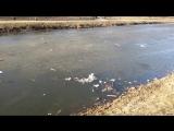 Загрязнение озера в Парке 1100-летия Смоленска