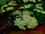 Волшебная флейта (3) Прелюдии - Фредерик Шопен