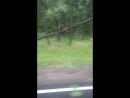 Саранск ураган повалил деревья вдоль дороги Дракино Айкино Баево Парца Барашево Леплей Ширингуши