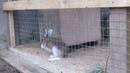 Дома для зайцев