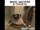 Мопс застрял в туалете dog joy мопс застрял туалет винипух 750 X 750 mp4