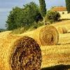 АгроПоиск | Аграрная доска объявлений