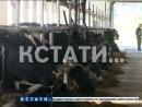 Проект Эффективная губерния стартовал в сельском хозяйстве Нижегородской области