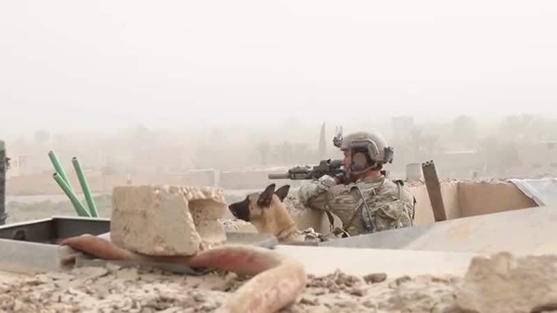 Военнослужащие подразделений специального назначения коалиционных сил оказывают поддержку СДС в ходе боев с ИГИЛ в провинции Дей