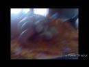 мое_первое_видео_не_судите_строго_HD_MEDIUM_FR30.mp4