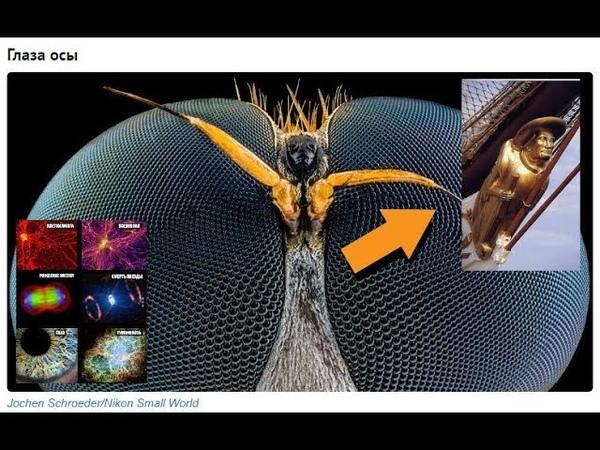 Этот безумный и красивый микромир. Бессмертные существа. Виртуальный уплотнитель.
