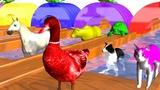 Los animales de granja y sus cr