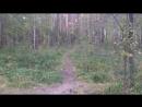 Скоростной спуск с мёртвого леса по ямонезакопингу