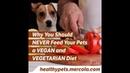 Почему нельзя сажать животное на вегетарианскую диету Why You Should NEVER Feed Your Pets a VEGAN and VEGETARIAN Diet