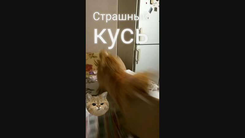 VID_40160209_024115_568.mp4