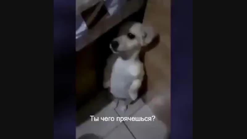 Ты чего прячешься? [ vk.com/CINELUX ]