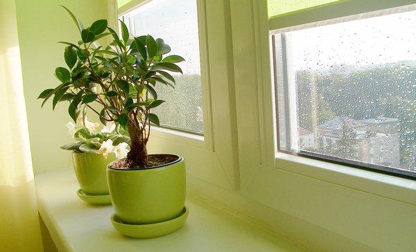 зима: как избежать ошибок в уходе за комнатными растениями если комнатные растения поникли: листья потускнели и покрылись пятнами, побеги вытянулись, а бутоны опали, - не торопитесь обрабатывать