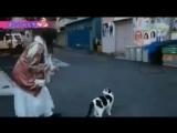 Aina's cat