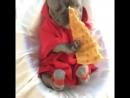 Собакен кушает пиццу
