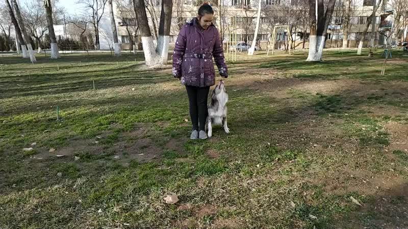 💛Жёлтые Карина Дерменджи и Мигель 2 задание основное доп