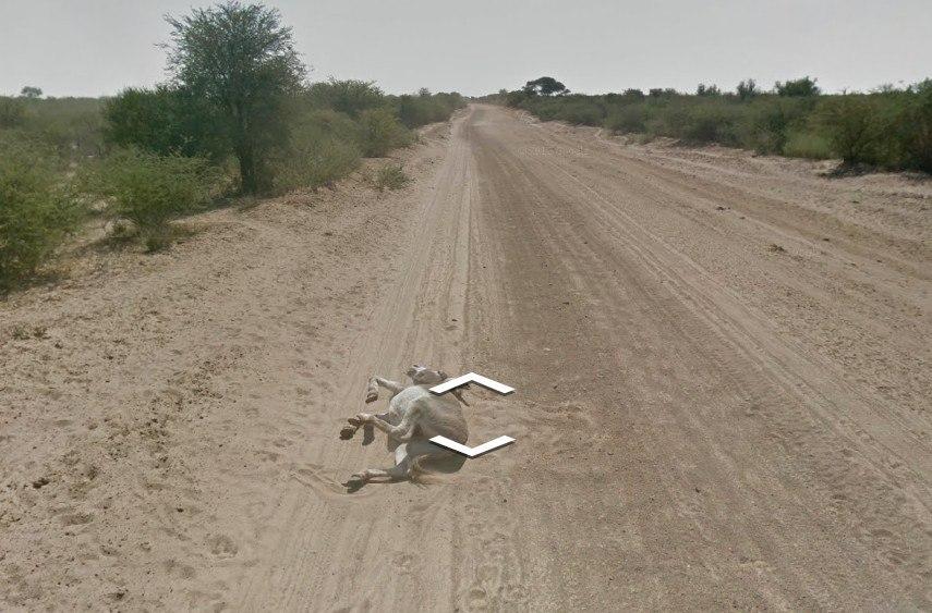 Гугл вбив осла