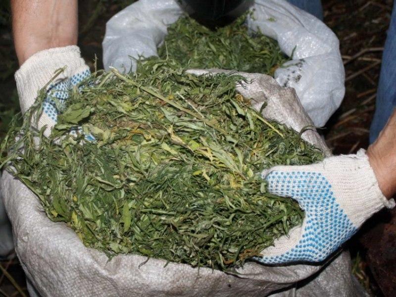 Под Таганрогом полицейские изъяли 1,2 килограмма марихуаны у 27-летнего мужчины