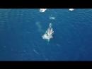 Появление синего кита в Красном море озадачило египетских экологов