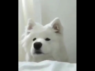 fren wake up