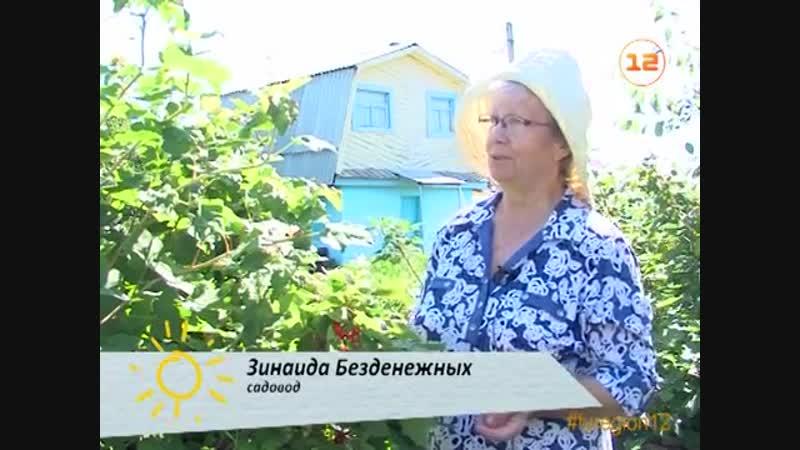 17_июля_2017_Урожайные грядки_Выпус_№17