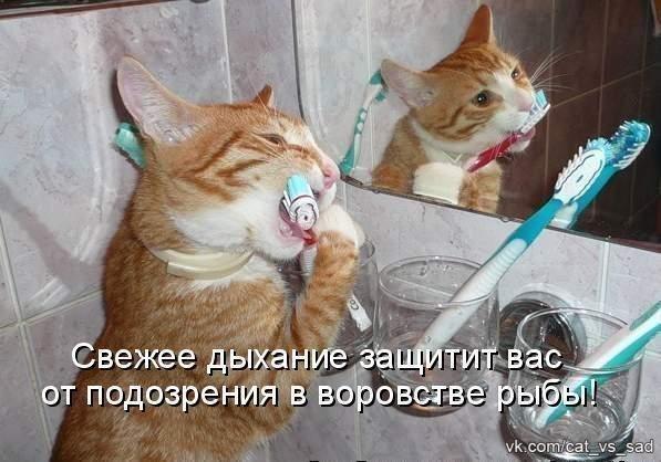 Наши кошки  7XgrixJcs80