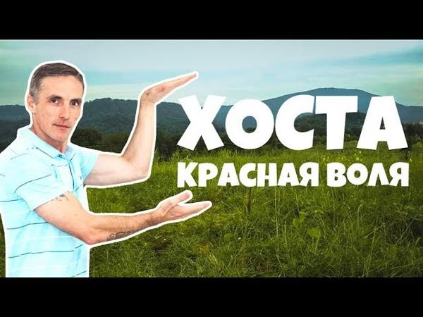 ВИДЕО-ОБЗОР 2-Х УЧАСТКОВ В ХОСТЕ | Земельные участки в Сочи