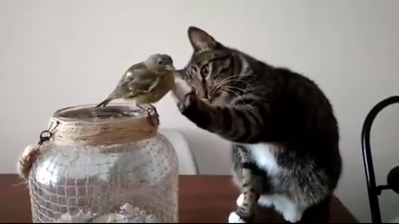 Котик и птичка первое знакомство