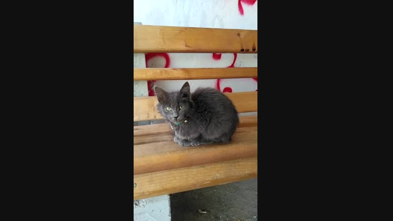 Найден домашний дымчатый котёнок