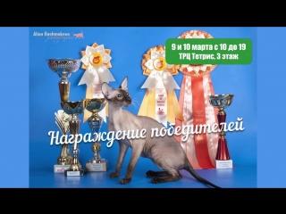Международная выставка кошек в  ТРЦ ТЕТРИС