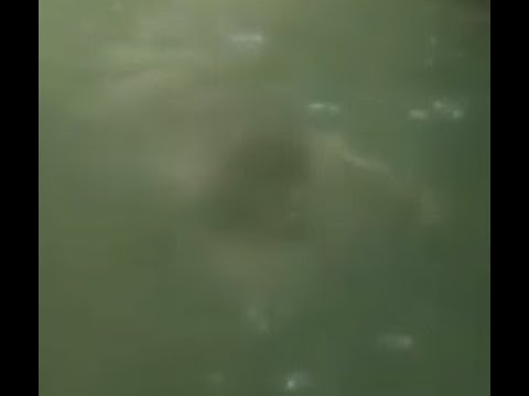 Eerie Apparition Filmed Chasing Water Tuber On Isabela River Canals, Puerto Rico. July 8, 2018