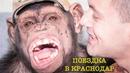 Дан Запашный перевозит Цирковых животных, обезьян Шимпанзе