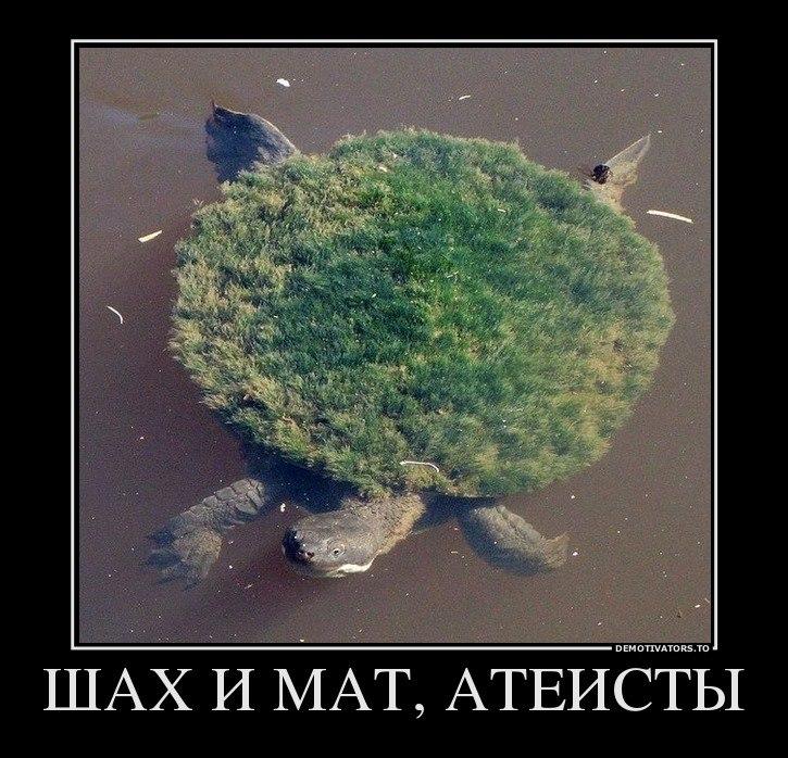 Они фото самых красивых мужчин в россии может, Интерпола, группы
