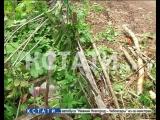Коммунальный вандализм в Арзамасе - срезая деревья на кладбище, рабочие разрушили могилы