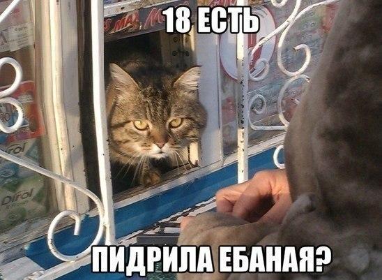 fAFEVAScbsk.jpg